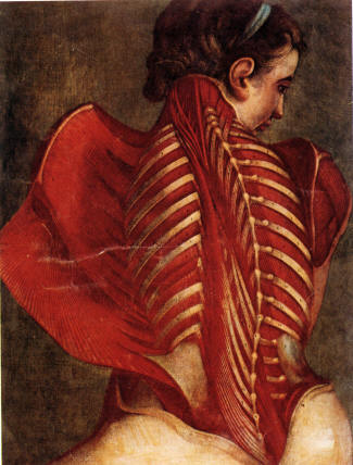 The macabre eroticism of the 'Anatomical Angel' (1/3)