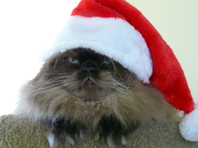 Merry Fuckin' Christmas, from this cat.