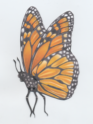Monarch butterfly profile revised